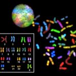 spectral_karyotype
